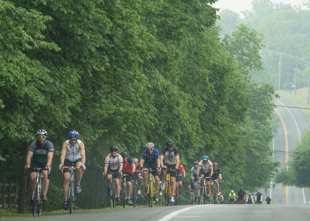A pack of Fondo riders climb Route 52